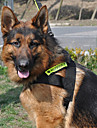 Suit Pet universelle de Nuit Harnais de sécurité réfléchissant avec une laisse pour chiens (couleurs assorties)