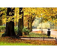 3*5ft Big Photography Background Backdrop Classic Fashion Nature autumn scenery Theme for Studio Professional Photographer