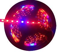 Недорогие -300 светодиоды Светодиодная лента 5M Синий Красный Можно резать DC 12V