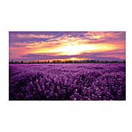 Palapeli Lelut Aurinkovoiteet Flower Ei määritelty Pieces