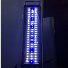 أحواض السمك إضاءةLED أبيض أزرق توفير الطاقة 2 الوضع مصباح LED 220V