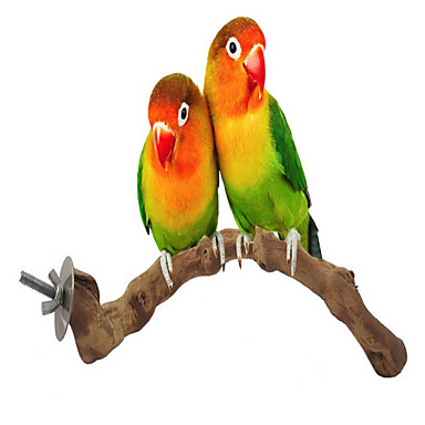 Ptak Zabawki Drewno