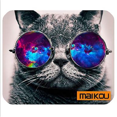 kat med briller